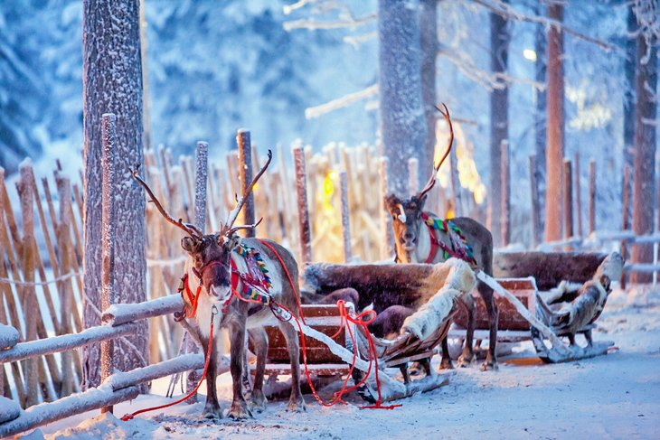 finland-rovaniemi-top-things-to-do-reindeer-sled-rides.jpg
