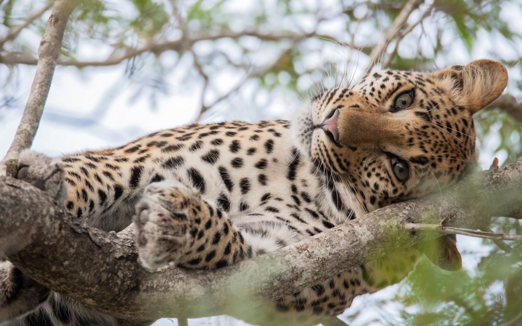 Jaguar-animals-39998088-1440-900.jpg