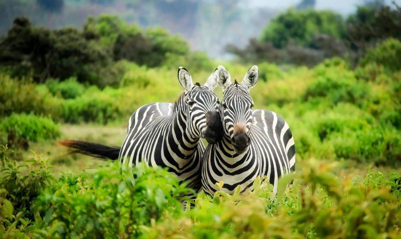kenya-1883654_1920-816x487.jpg
