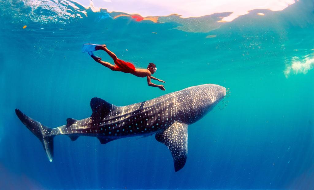 boy-swims-w-whale-shark.jpg
